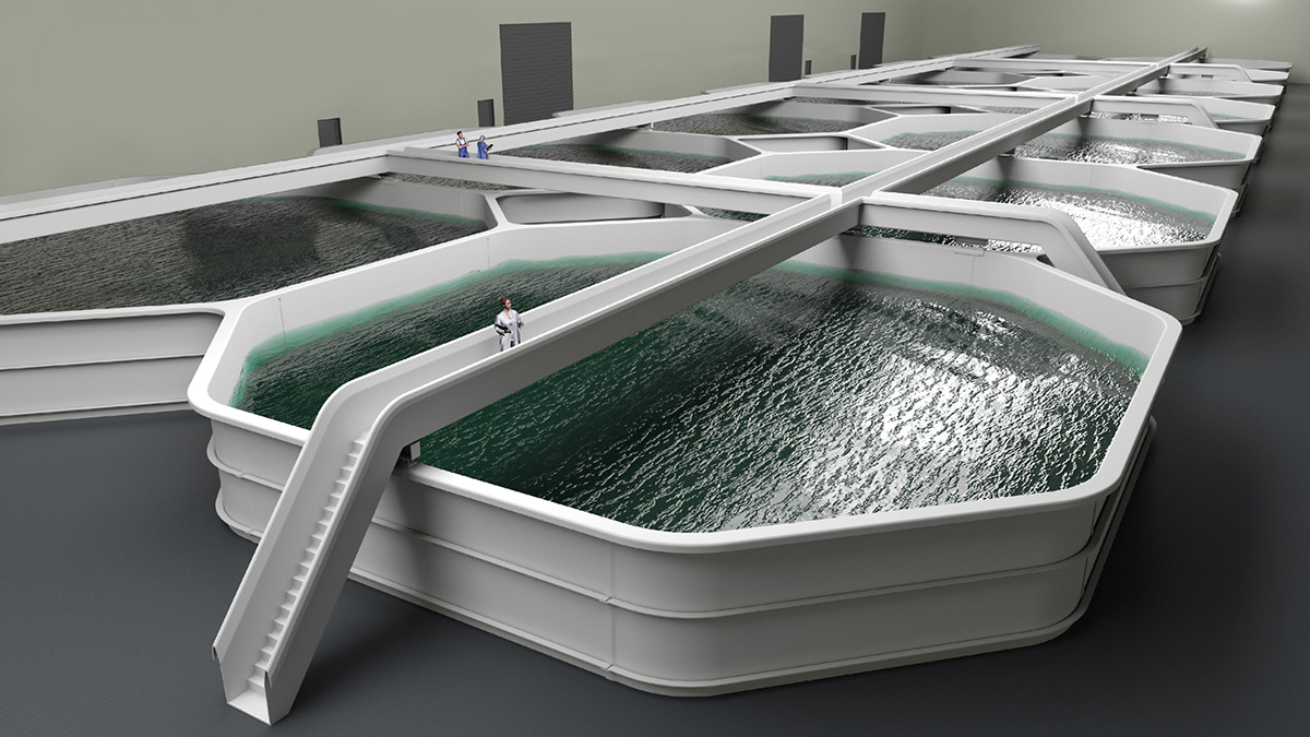 Fish tanks with Less-Stress bridges